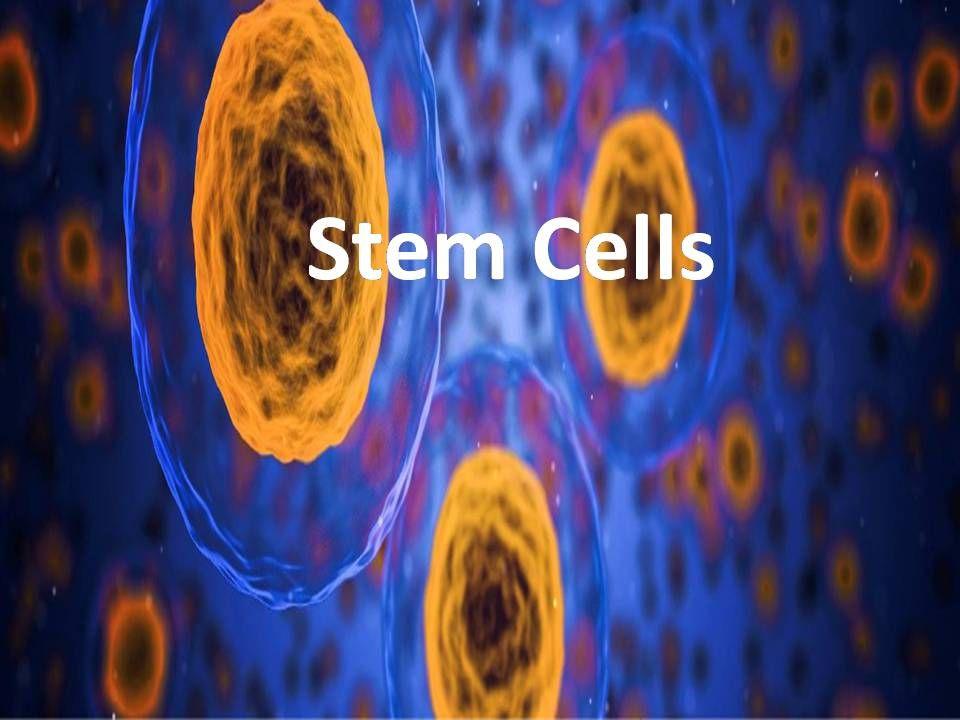 Park Art My WordPress Blog_Stem Cell Hair Regrowth Cost