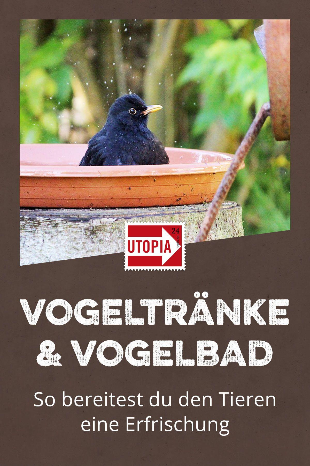 Vogeltränke und Vogelbad aufstellen: So bereitest du den Tieren eine Erfrischung - Utopia.de