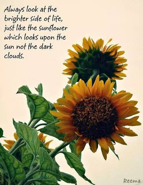 Always Look At The Brightest Side Of Life Just Like The Sunflower Which Looks Upon The Sun Not The Darkest C Sunflower Quotes Flower Quotes Flower Quotes Love