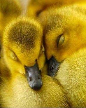 so damn cute when their eyes are closed!!