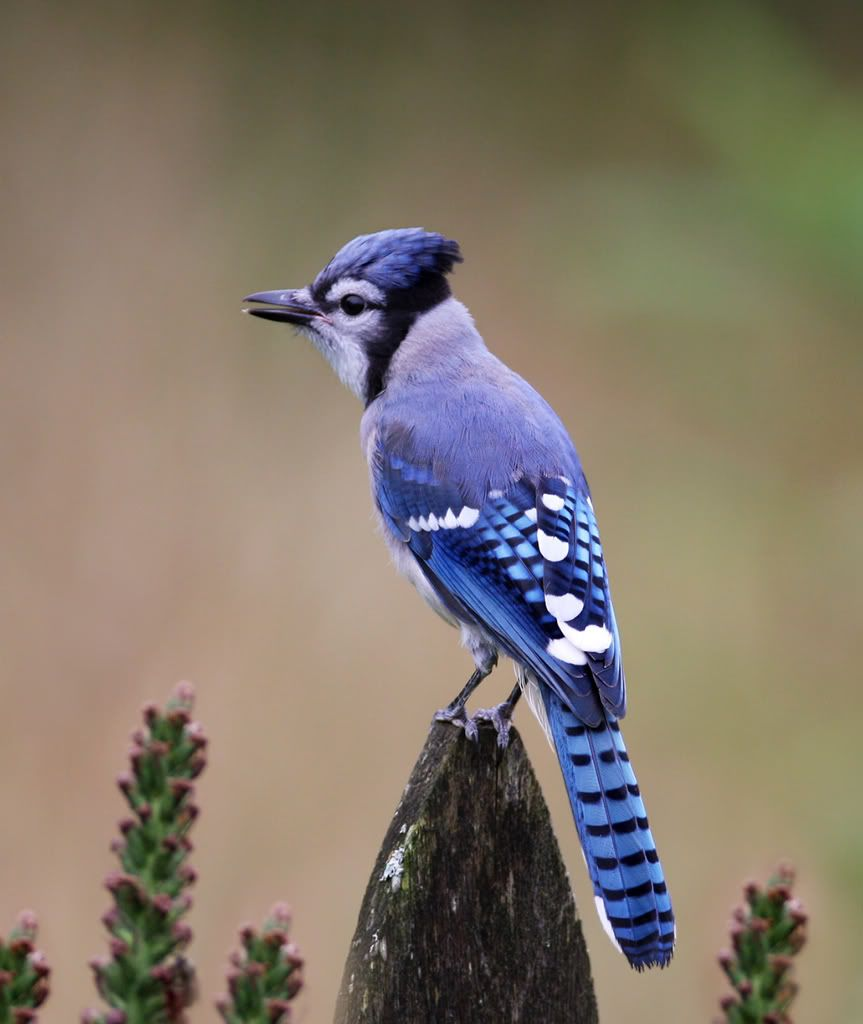 more than 100 north american bird species supplement their natural