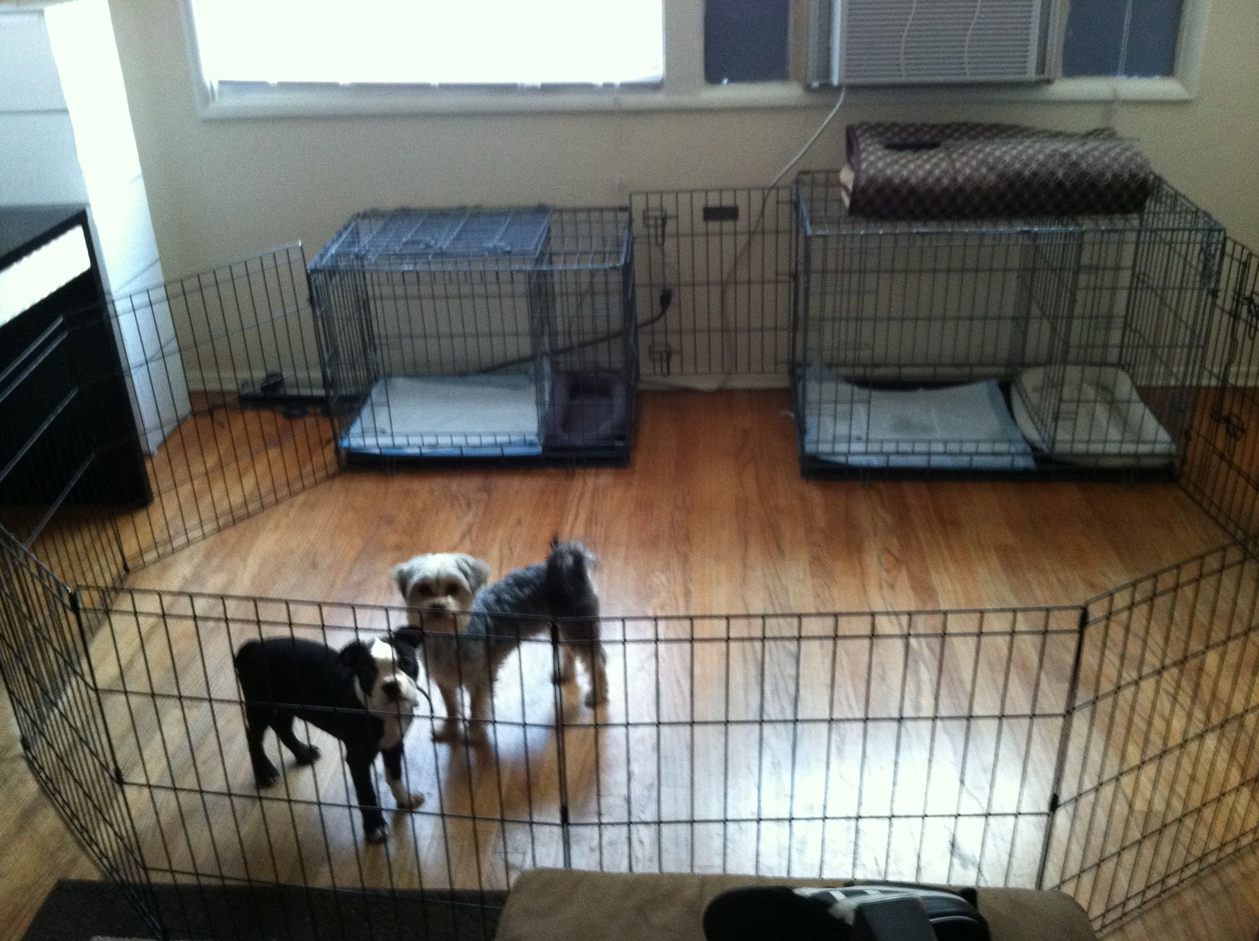 Potty Training A Puppy Share This Pin With Anyone Needing To Potty Train A Puppy Or Dog Chikis And Bo House Training Puppies Dog Playpen Potty Training Puppy