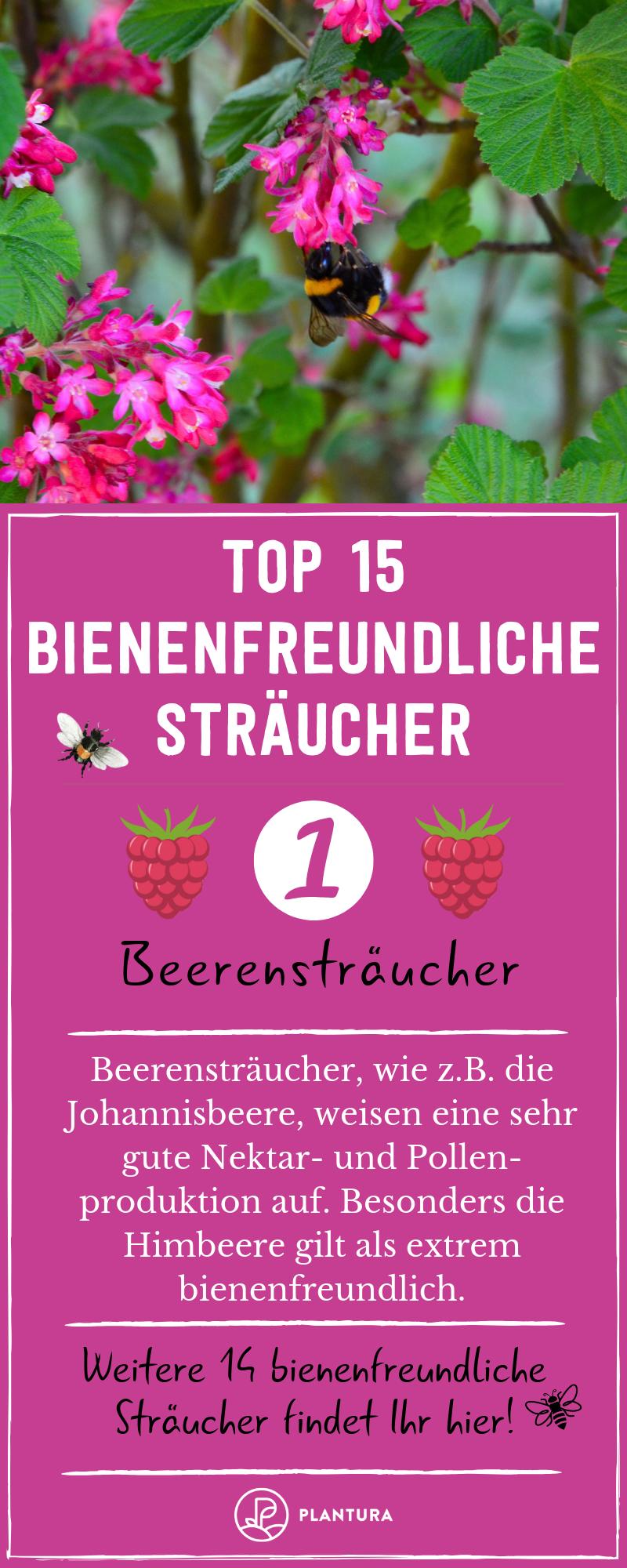 Bienenfreundliche Straucher Top 15 Bienenstraucher Bienenfreundliche Straucher Straucher Garten Straucher Pflanzen
