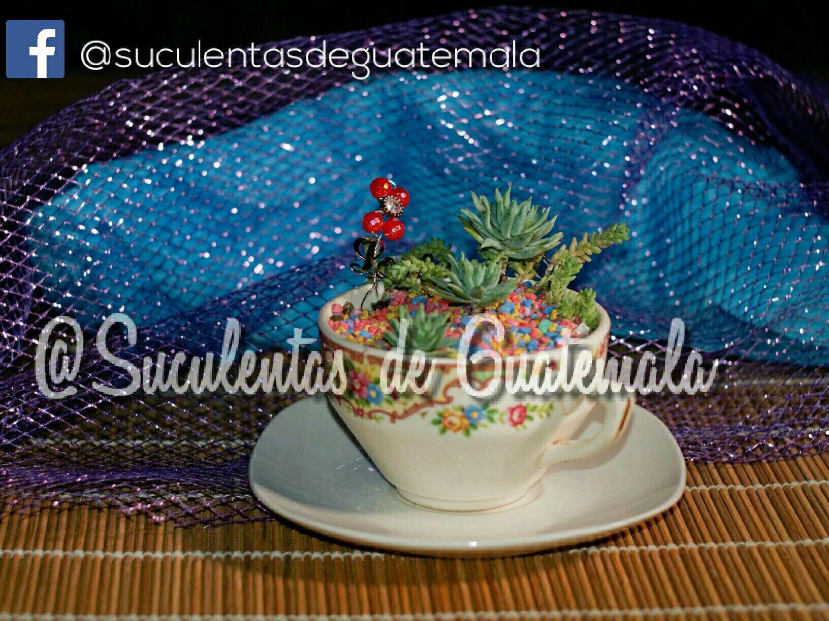 #Te #Time #Succulent #Cup @suculentasdeguatemala