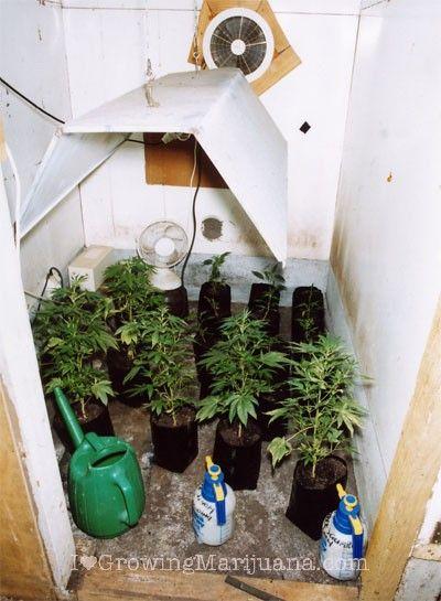 budget marijuana garden gardening pinterest cannabis