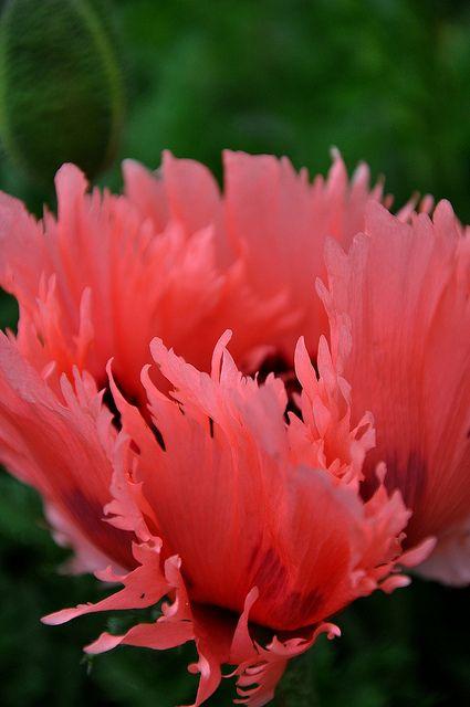 Salmon Colored Herringbone Blazer: Flowers, Beautiful Flowers