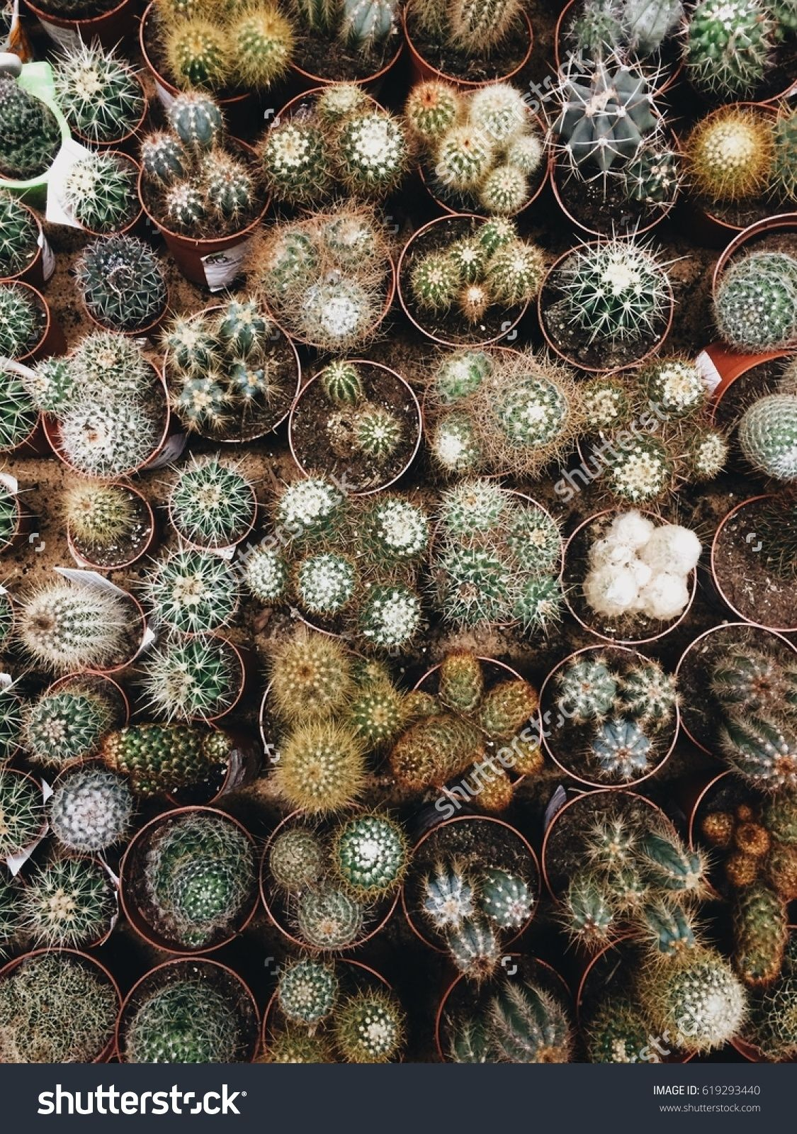Different Kinds Of Cacti Top View Small Cactus In Local Market