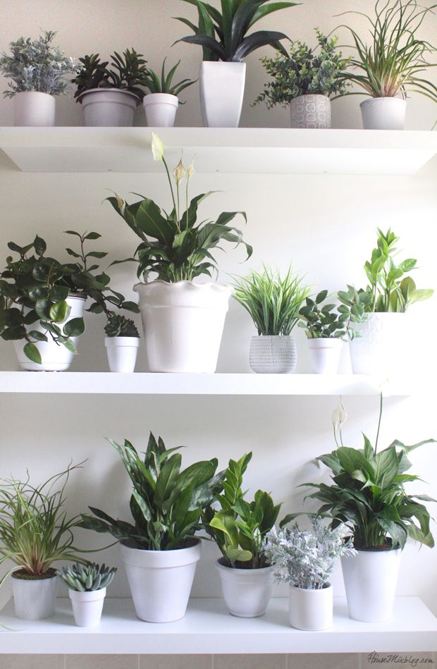 Plant  wall  in the bathroom Cheap plants  Fake  plants  and