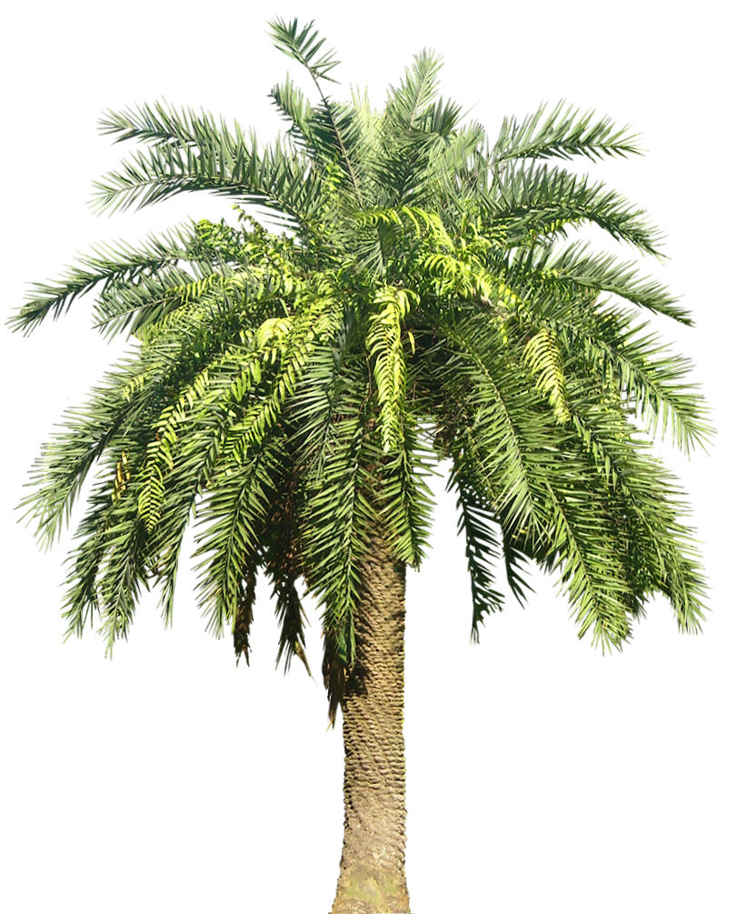 A Collection of tropical (and subtropical) plant images ...