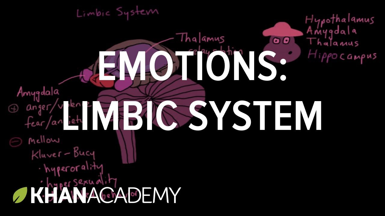 Emotions limbic system processing the environment mcat khan emotions limbic system processing the environment mcat khan academy ccuart Image collections