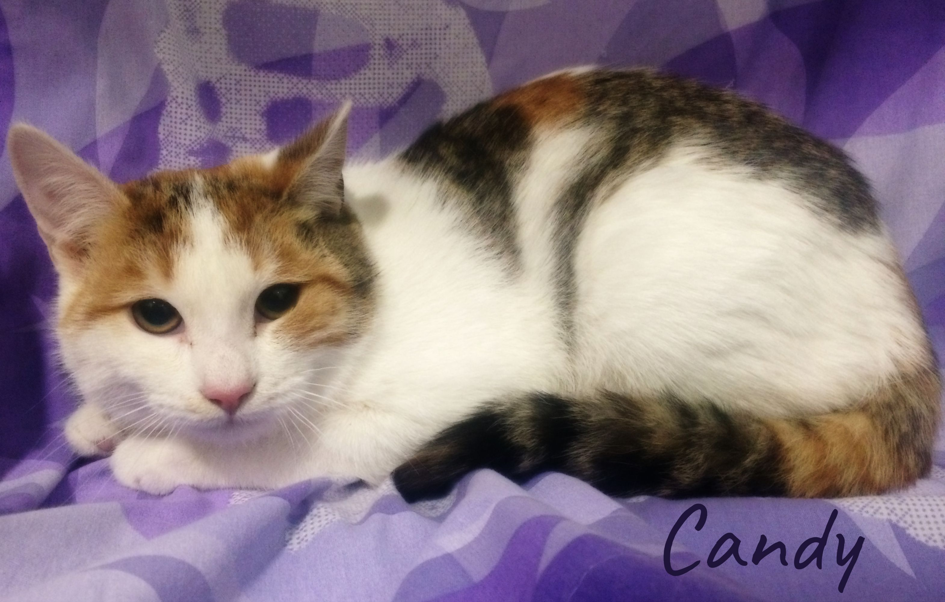 Adopt Candy on Petfinder Cat adoption, Help homeless