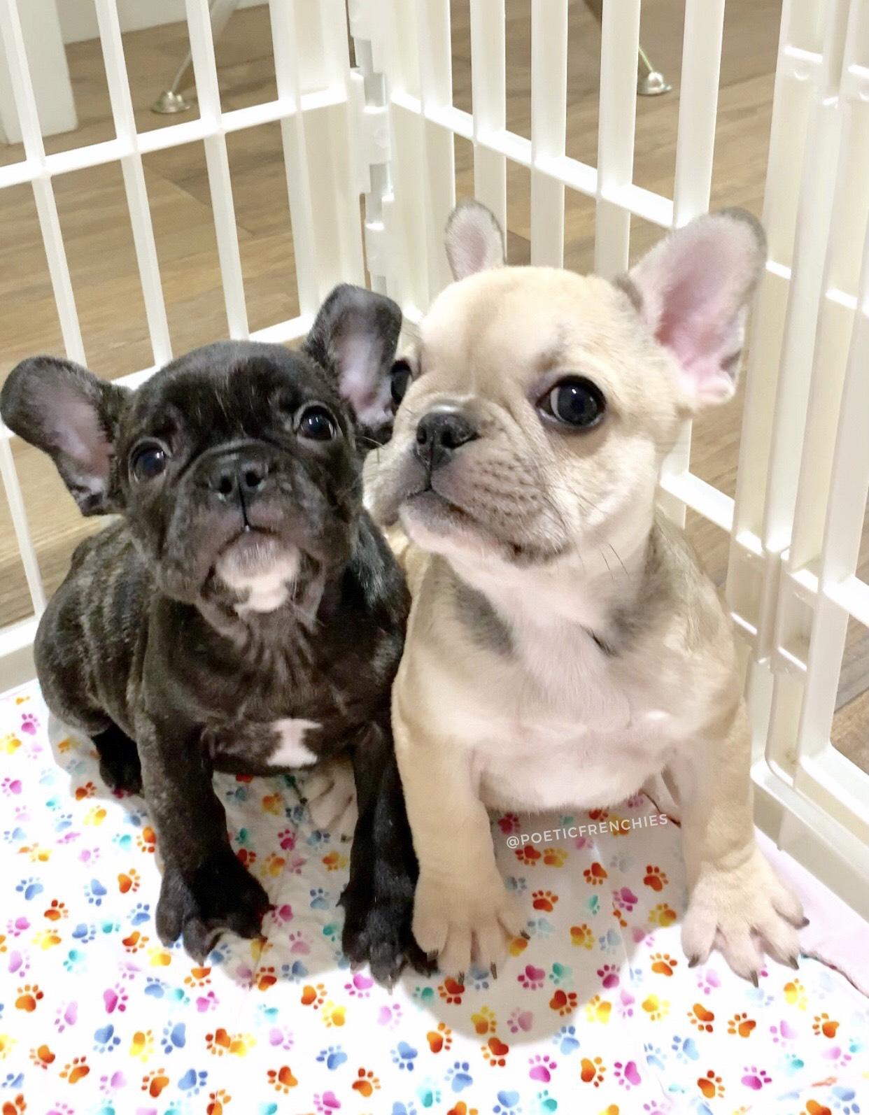 DOG LOVERS (insta_dog) Instagram Posts, Videos & Stories