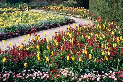 bedding plants and displays/rhs gardening  rhs level 2 summer