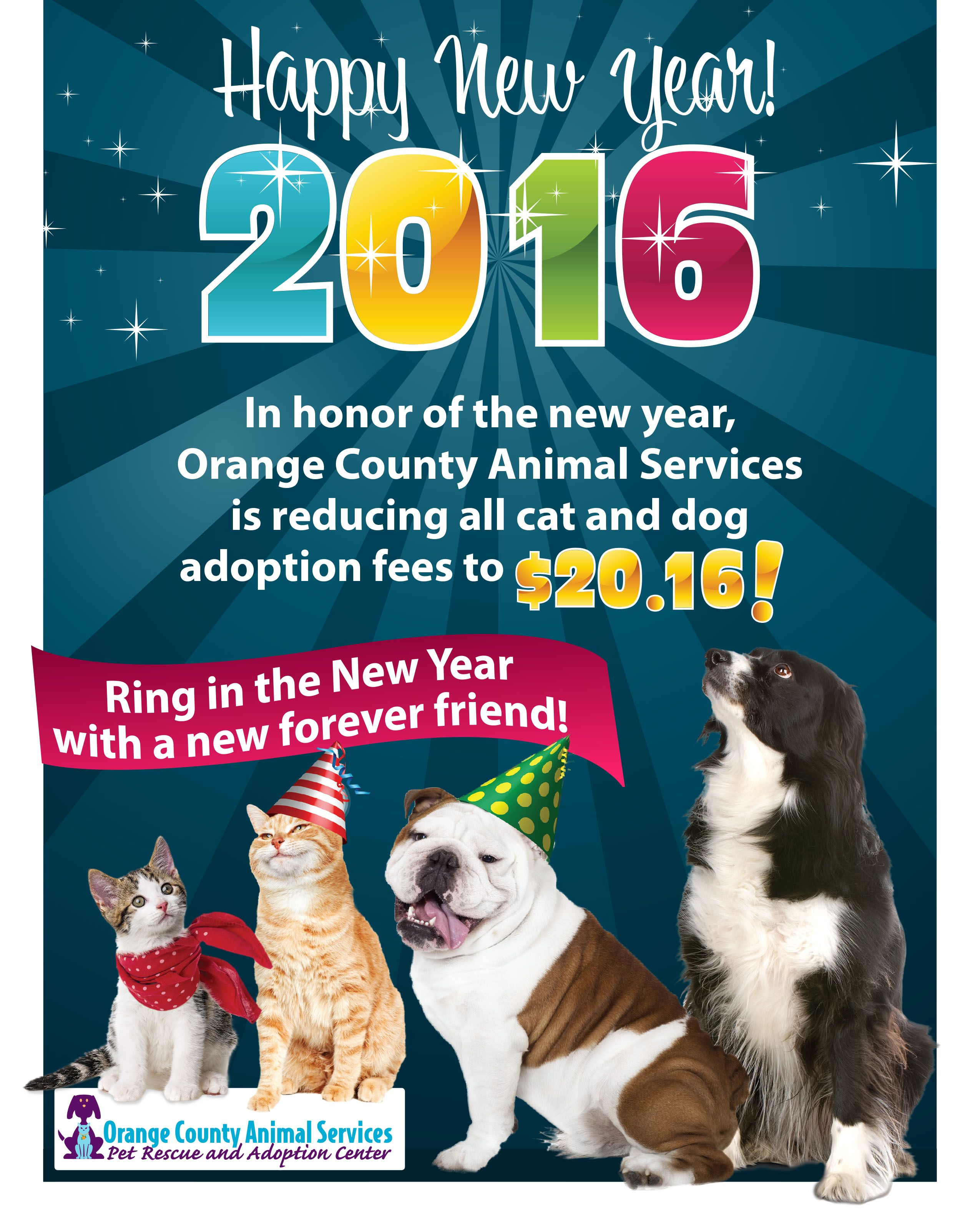 Animal Shelter Adoption Promotion Ideas Animal Shelter Adoption Animal Shelter Adoption