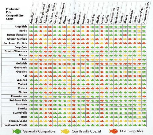 Freshwater Fish Compatibility Chart Fish Chart Freshwater Aquarium Fish Tropical Fish Aquarium