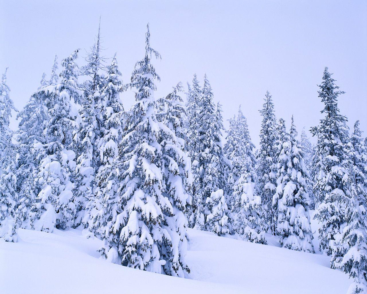 Wintertraum   Winterwunderland   Pinterest   Winter und Winterwunderland