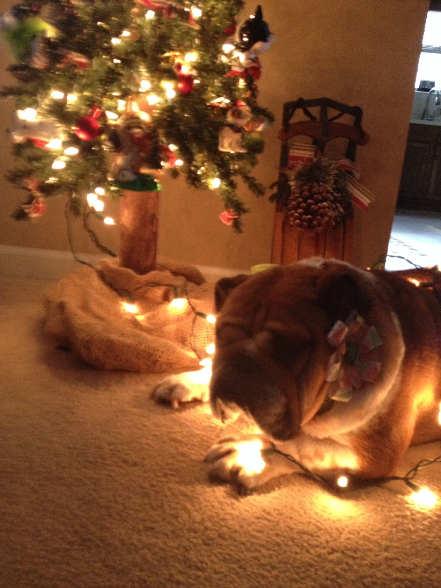 Reba looking festive!