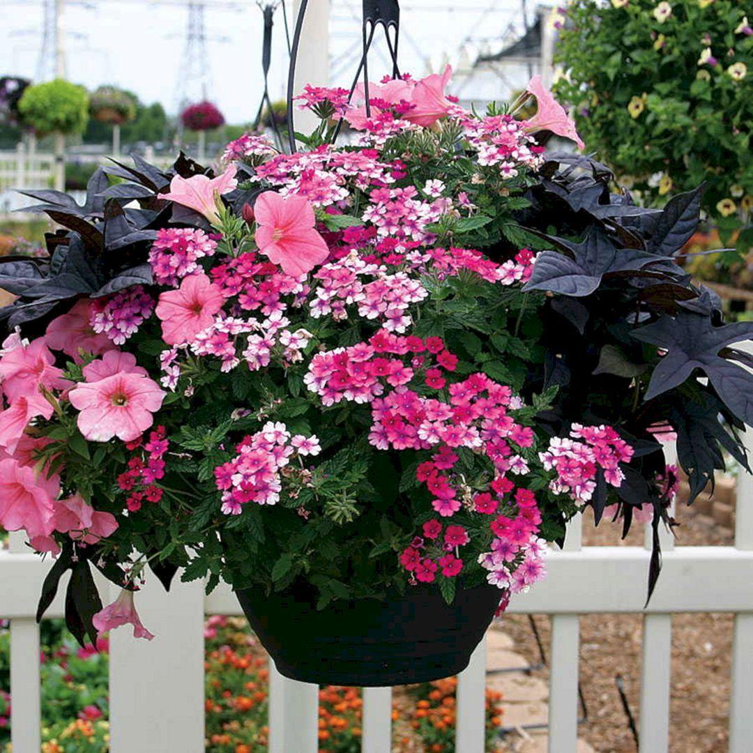 Pink Plant Combinations (Pink Plant Combinations) Design