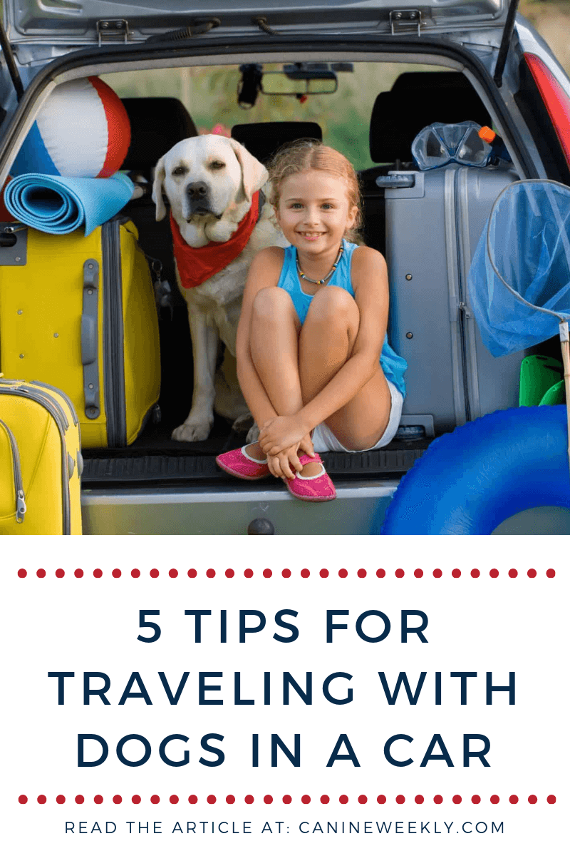 5 Tips for Traveling With Dogs in a Car (Especially When They're Big