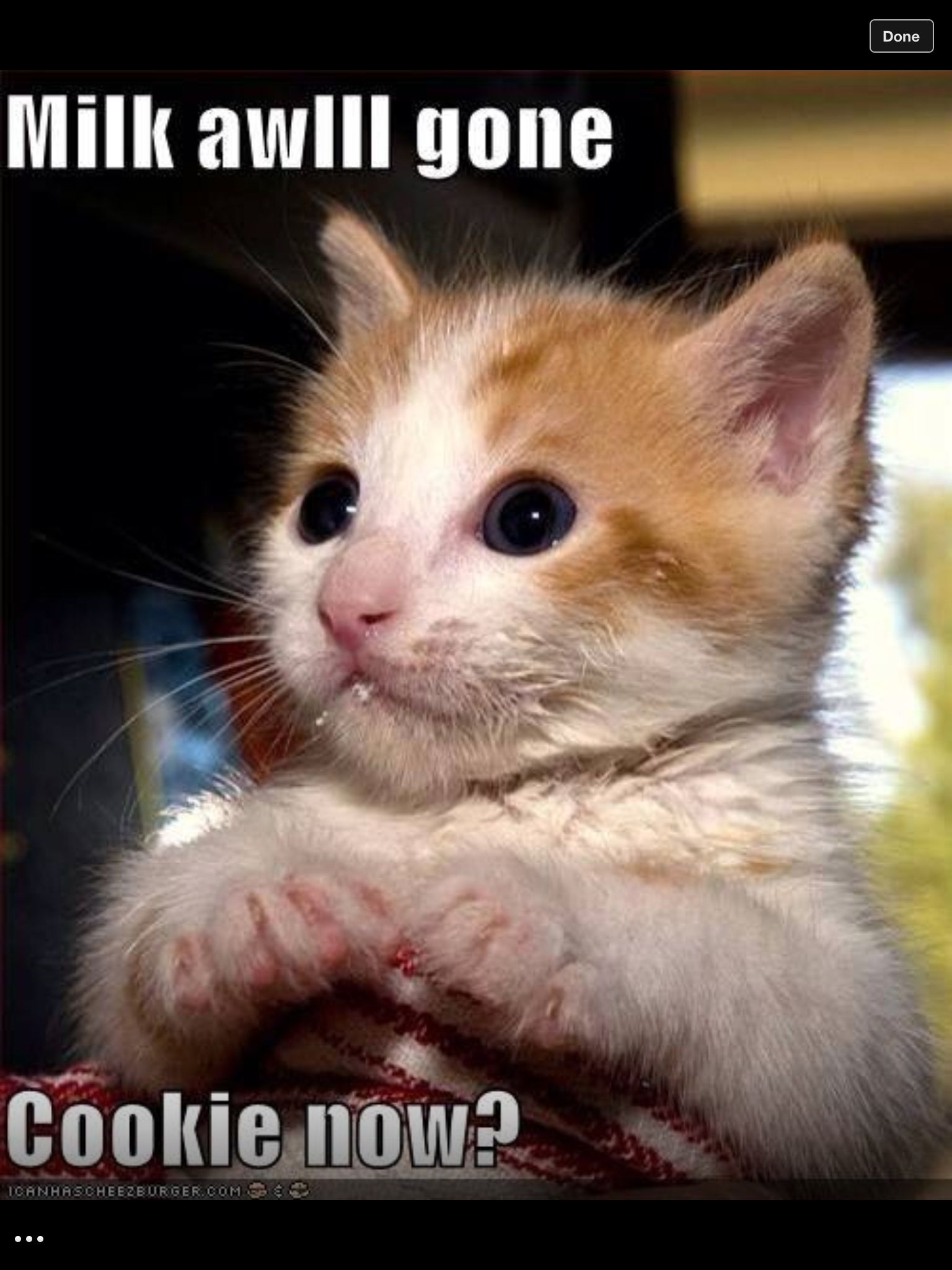 Pin By Gabriella Darko On Cats And More Cats With Images Cute Animals Funny Animal Memes Funny Animal Pictures