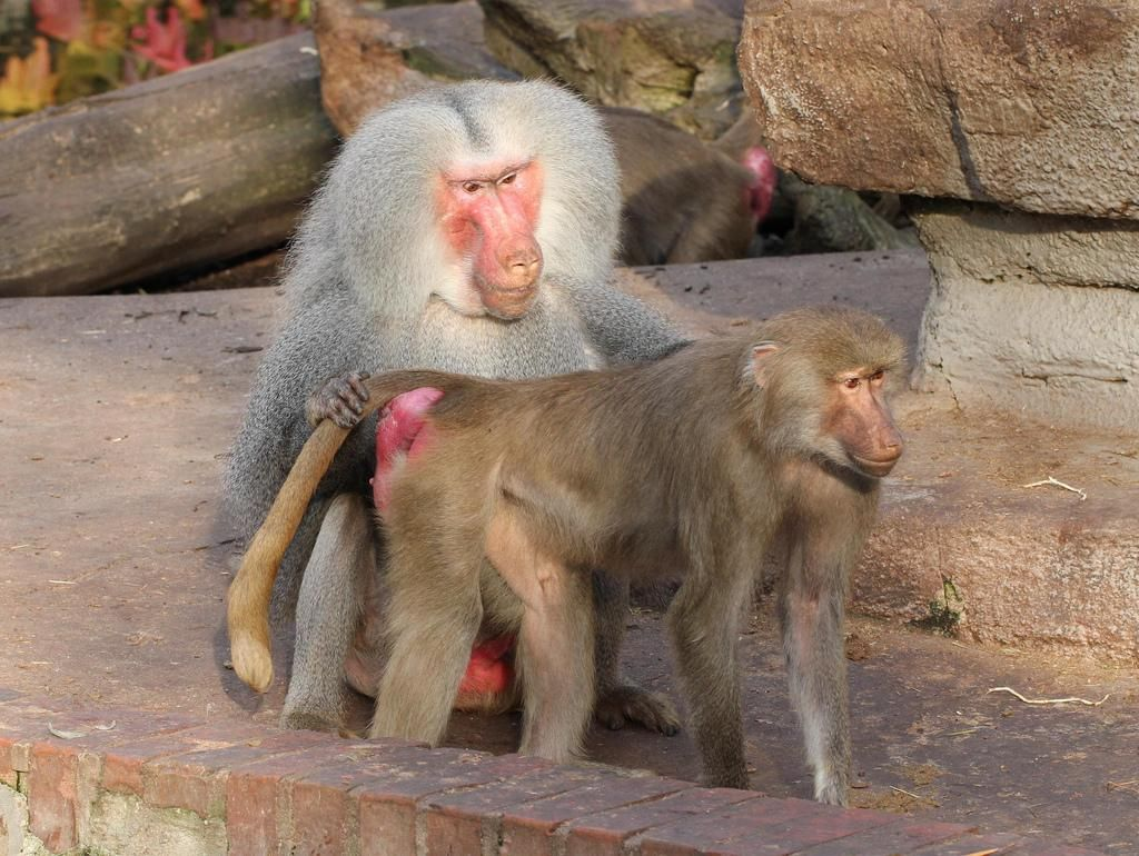 Do humans have cold, evil monkey hearts?