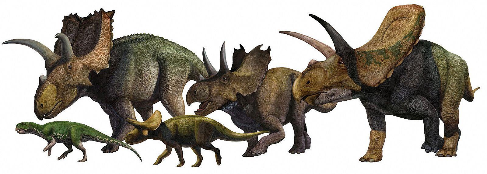 Ceratopsia © Sergey Krasovskiy