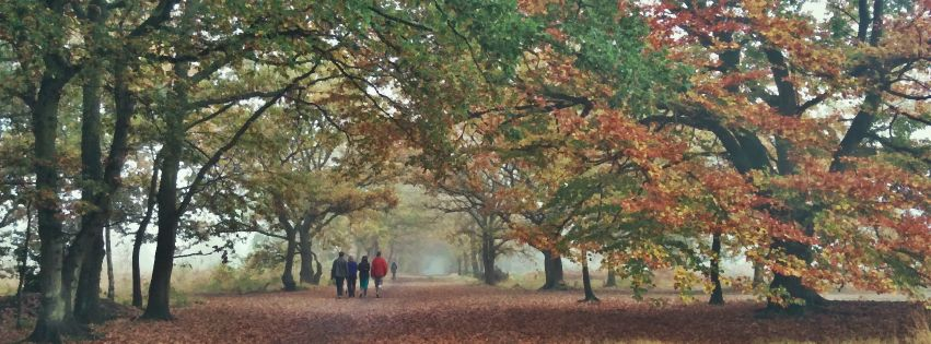 Stock images: Facebook cover photo (851px x 315px) - Trees - Wimbledon Common -1 November 2015
