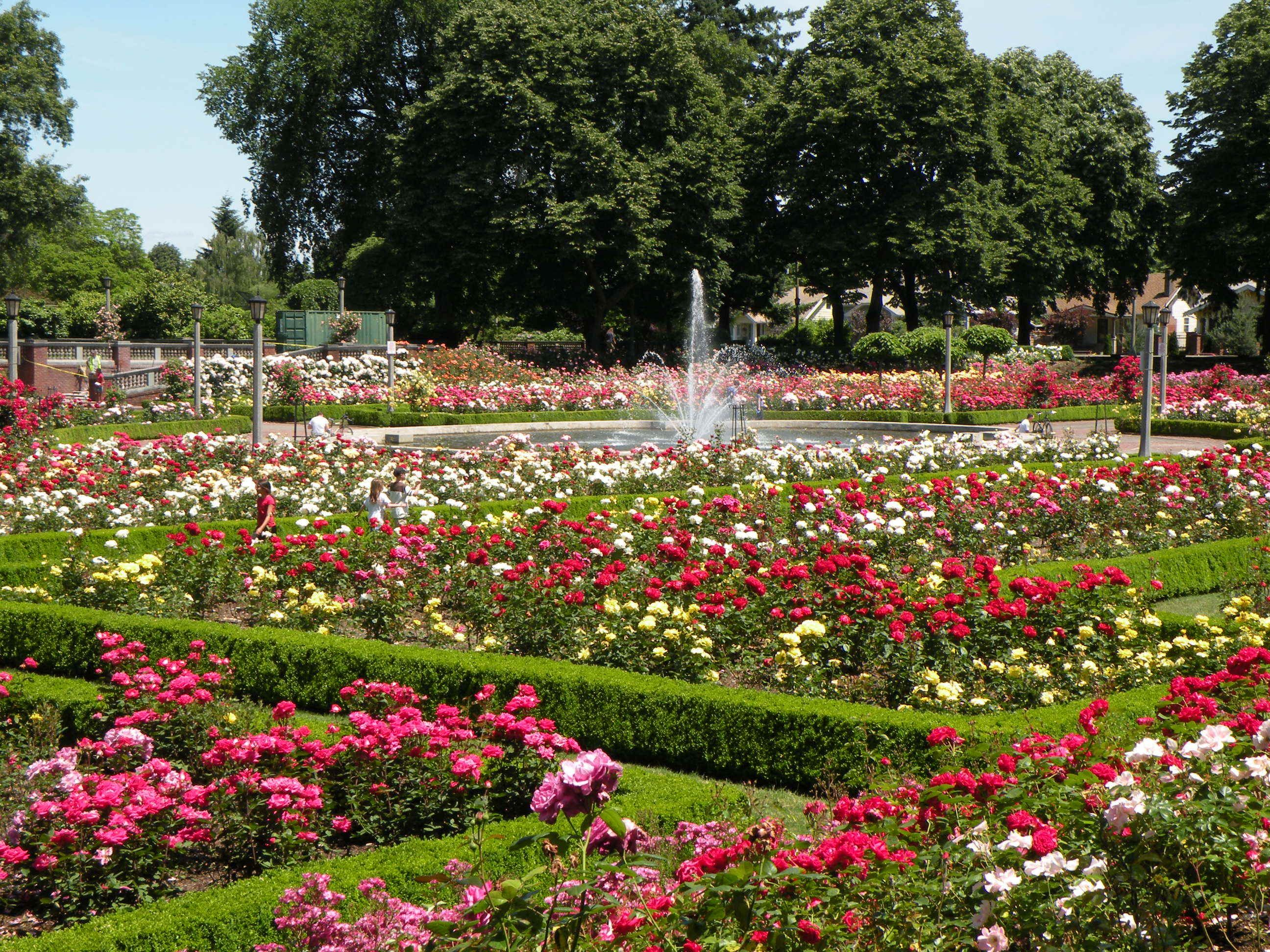 "Most Beautiful Rose Gardens In The World the ""rose garden"" in portland has the most beautiful roses in the"