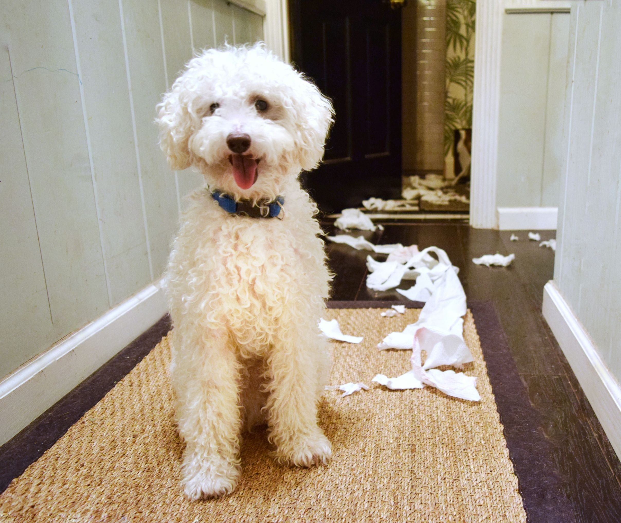 My Pet Wrecked My Apartment Now What My First Apartment Dog Mess Dogs Pets