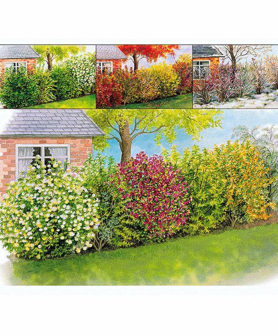 Vier-Jahreszeiten-Hecke Produktbild Garten Idee Pinterest