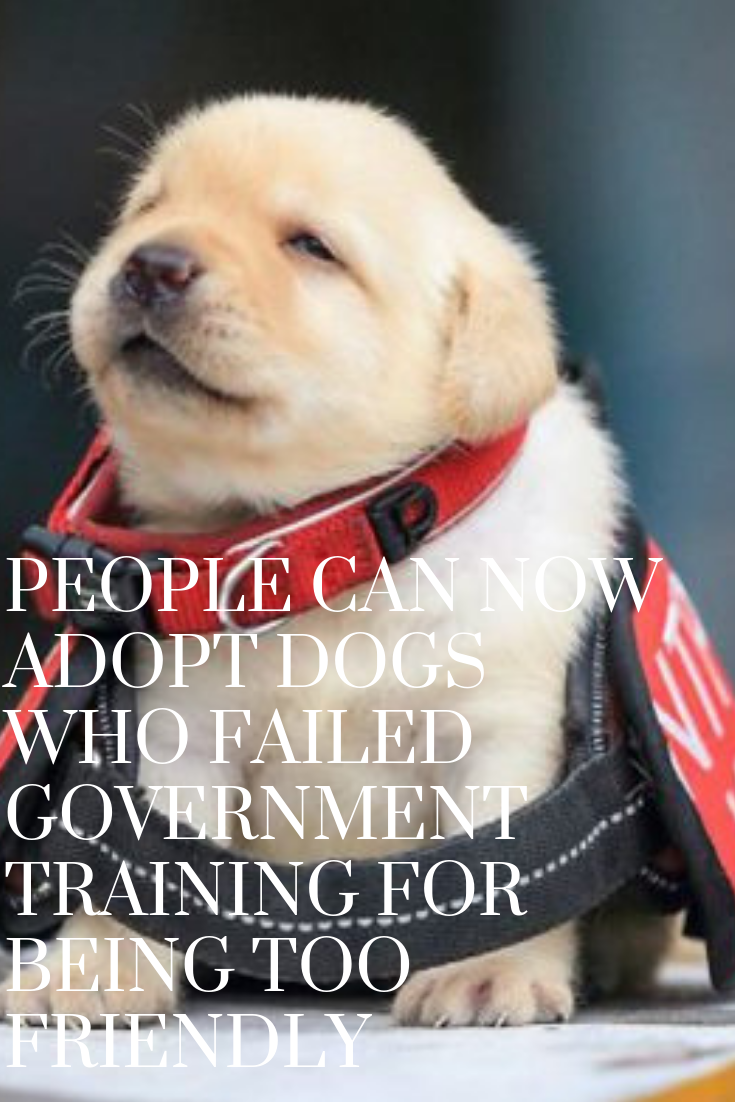 People Can Now Adopt Dogs Who Failed Government Training For Being Too Friendly Dog Adoption Dog Walking Dog Advice