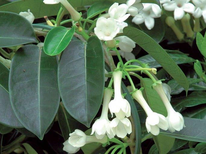 Epingle Sur Plantes