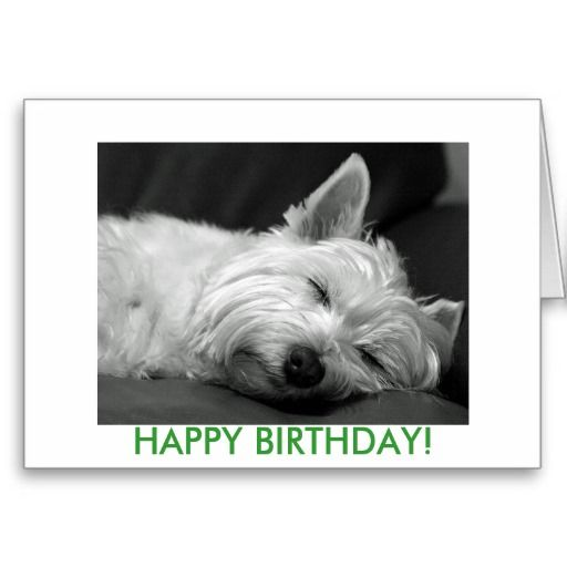 Westie Dog Birthday Card Doggy Stuff Pinterest Dog Birthday