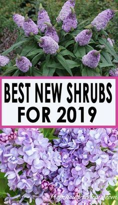 Best New Perennials and Shrubs For 2019 These gorgeous new varieties of perennials and shrubs will definitely add some beautiful flowers to your garden this summer.These gorgeous new varieties of perennials and shrubs will definitely add some beautiful flowers to your garden this summer.