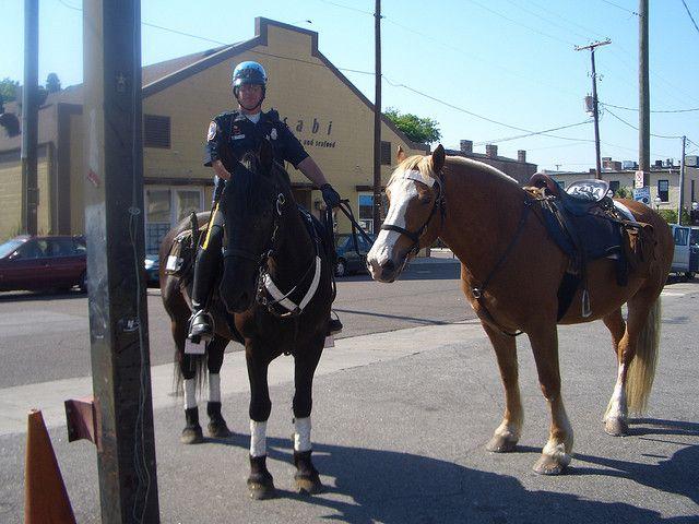 Charleston Sc Mounted Patrol Baltimore Police Horses Law Enforcement