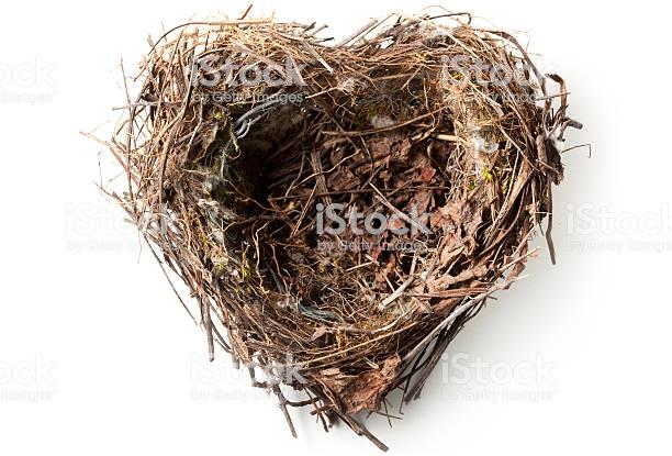 Nest Empty Home Animal Bird Nest Free Bird Nest Nest Bird