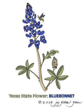 bluebonnet clip art google search tats pinterest clip art rh pinterest com Puppy Clip Art Texas Theme Clip Art