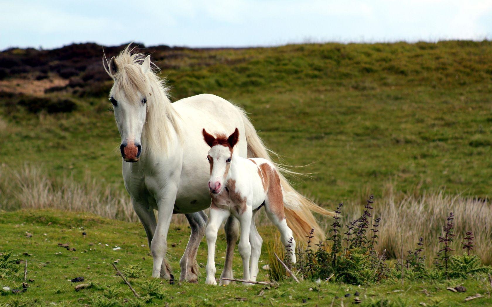 Kootation Com Horses Beautiful Horses Cute Horses