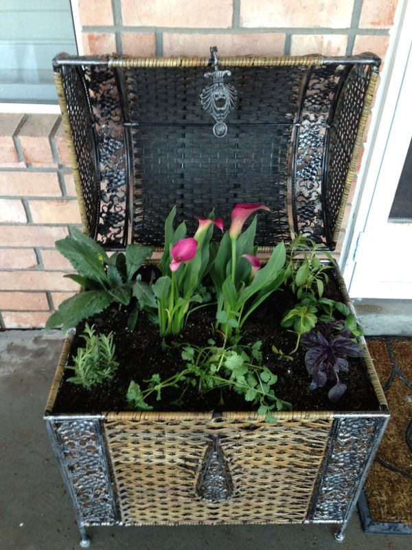 My herb garden