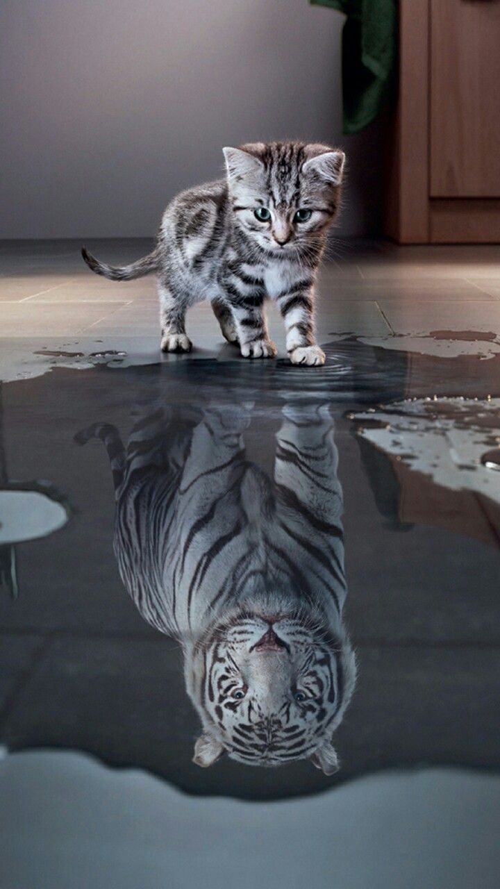 Susse Katze With Images Animale Rare Animale Haioase Animale Amuzante