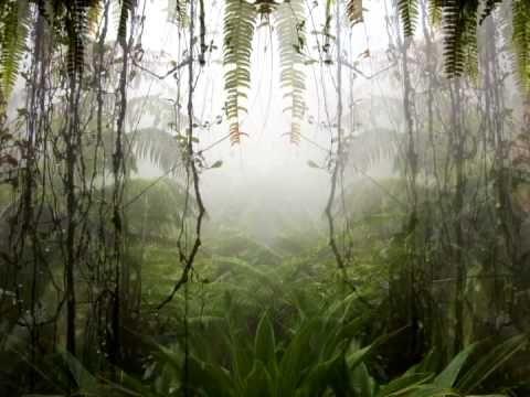♫ MUSICA Y VIDEO DE TAMBORES DE RELAJACION EN SELVA VIRGEN , MEDITACION ♫