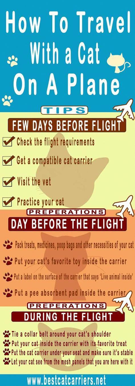 Are Cats Color Blind Whycatsarebetterthandogs Post 3173807505 Birthdaycakesforcats What Cats Can Eat Cat Travel Cats