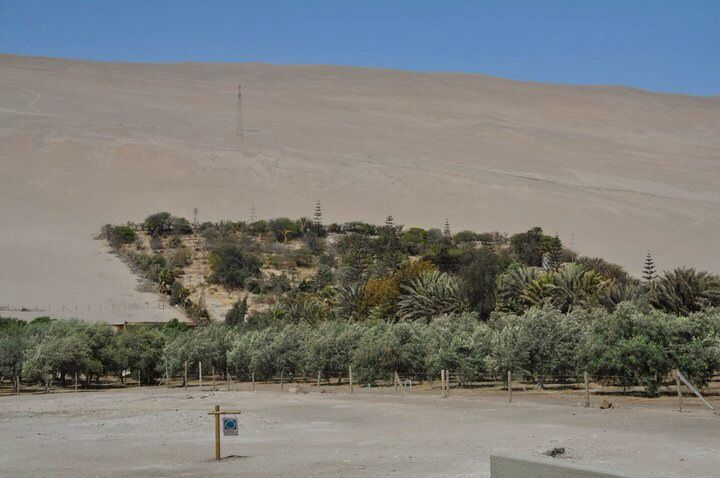 San Miguel de Azapa, Chile.