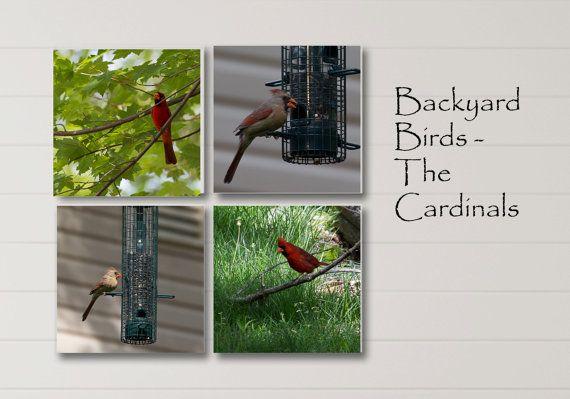 Cardinal Print Series Red Bird Set Bird by NatureImagesByDesign, $350.00