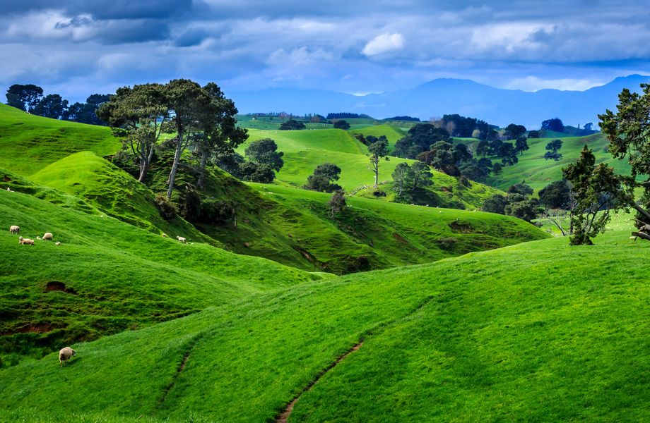 Fields In New Zealand 4k Ultra Hd Wallpaper 4k Wallpaper Net Landscape Photography Trees Landscape Photography Sunset Landscape Photography