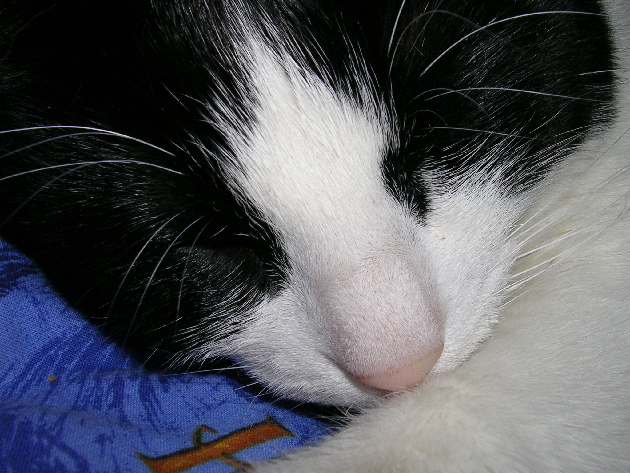 La photo de notre Lili qui sert d'avatar à Val Cats, Animals