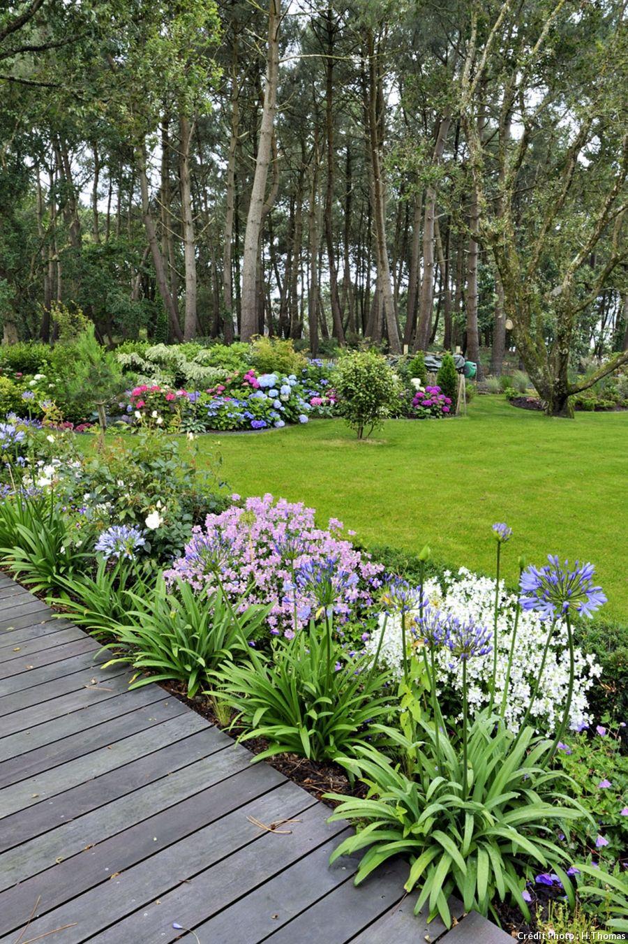 un jardin breton d'agapanthes et d'hortensias bleus | aménagement jardin