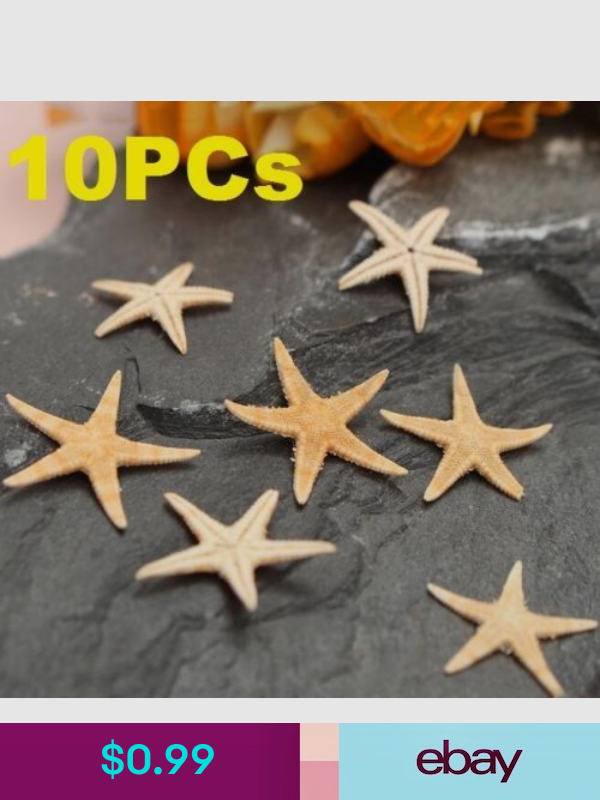 13++ Starfish for crafts uk ideas in 2021
