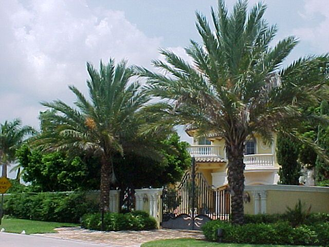 Miami Homes Floridahomes Bigmedjoopalms Californiapalms Realpalms Buy Date Palms Buydatepalmtrees Re Palm Tree Pictures Canary Island Date Palm Palm Trees