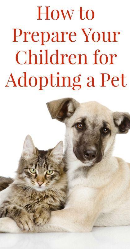 How To Prepare Your Children For Adopting A Pet Pets Adoption Adopting A Child